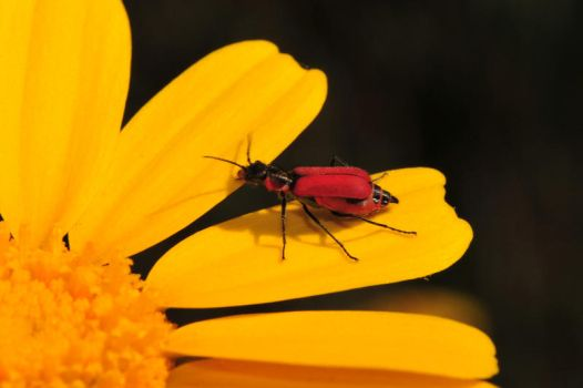 red and yellow by AMITSHITA