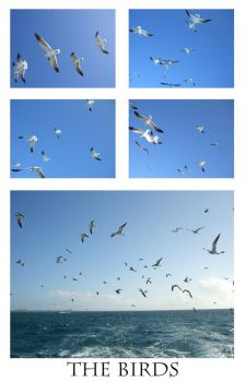 The Birds by meihua