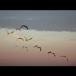 Bird fight by 13-septembre
