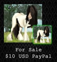 FOR SALE - Gypsy Vanner Portrait by PointyHat