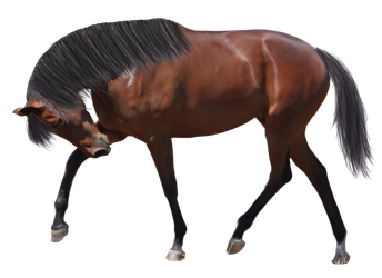 Precut Horse with Mane and Tail STOCK by EnchantedEquine