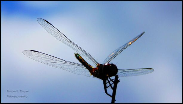 Dragonfly 6 by chained2stone