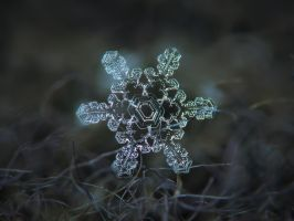 Real snowflake macro photo - Slight asymmetry by ChaoticMind75
