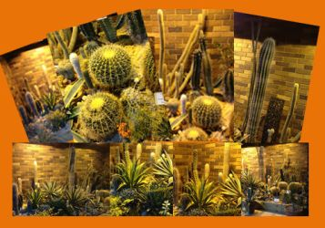 Eight unrestricted poorly lit cactus images by sfishffrog
