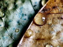 Drops of Autumn 5 by xNath