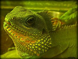 Portrait Of A Chinese Water Dragon by Estruda