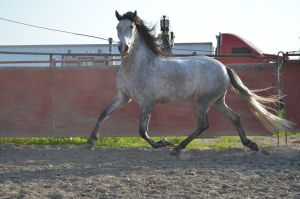 DWP FREE HORSE STOCK 215 by DancesWithPonies