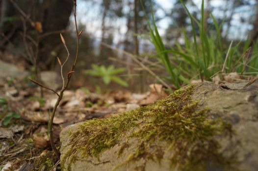 Forest by ggeorgiev92
