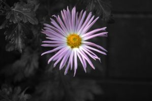 Flower by proudmuslimah