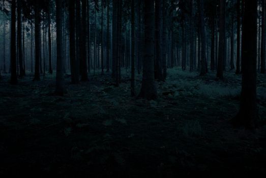 Forest Stock 2 by Sed-rah-Stock