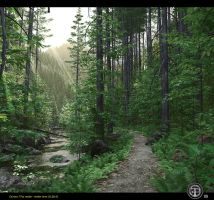 Four steps in the woods 02 by Fonpaolo