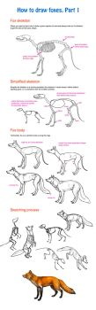 How to draw fox, part 1 by Elruu