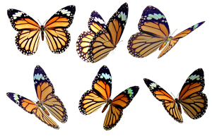 Butterflies 4 PNG Stock by Roy3D