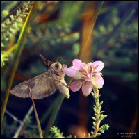 Little Creatures 046 by Frank-Beer