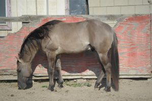 DWP FREE HORSE STOCK 269 by DancesWithPonies