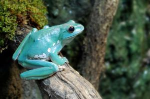 Tree Frog on a Tree Log by nothing2portend