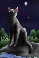 Jayfeather once again by AnnMY