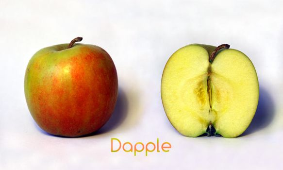 Dapple by aajohan