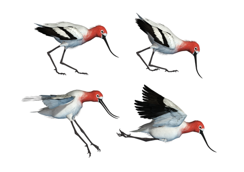 Wading Bird 01 PNG Stock by Roy3D