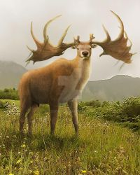 The King of the Hill: Megaloceros giganteus by Leogon