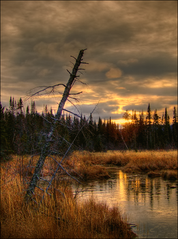 Dead Wood and Dusk by wb-skinner