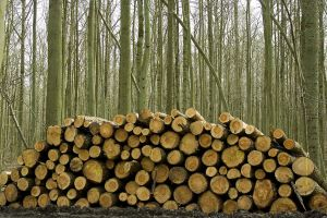 Wood Pile 6979706 by StockProject1
