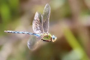 Flight of the Dragonfly by MaresaSinclair