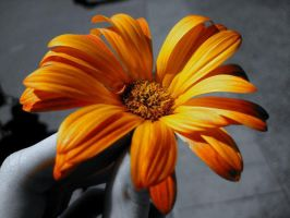 Orange Flower by geezimanerd314