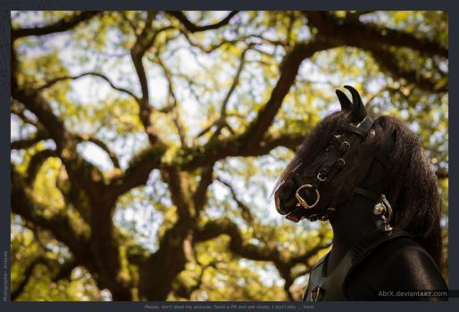 Do horses eat Spanish Moss? by AbrX
