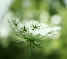 Pure feelings by Alessia-Izzo
