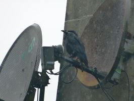 No satellite signal by setanta5