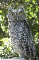 Whooo are you looking at? by Ciameth