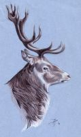 Stag Portrait by captainhawkeh