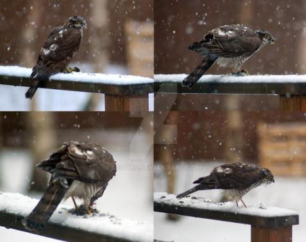 Feathers in the snow by decors