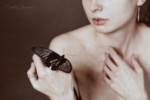 Butterfly by NataliaDrepina