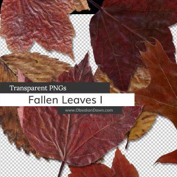 Fallen Leaves PNGs by redheadstock