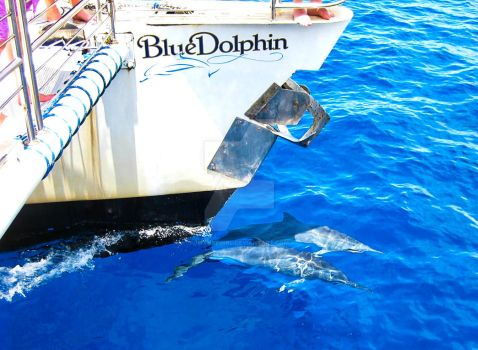 Dolphins with the Blue Dolphin by Utukki-Girl