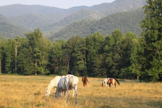 Horses of the Cove by sassybikerchic