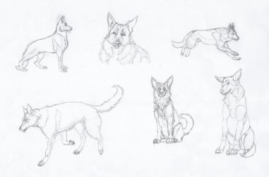 GSD sketches by casinuba