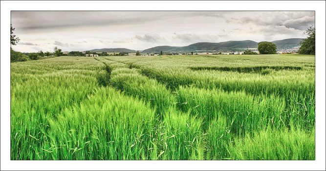 Field in Thuringia by pixelpriester