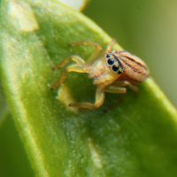 Macro Spider 3 by RichardjJones