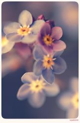 Forget me not - 2 by anjali