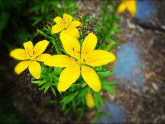 Stone Path to Yellow Flowers by Amzsie