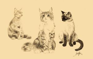 Cats by AndrePaz