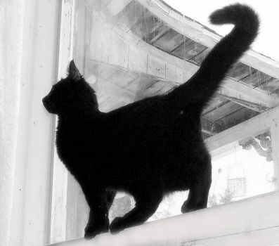 Silhouette Of My Kitty - BW by JocelyneR
