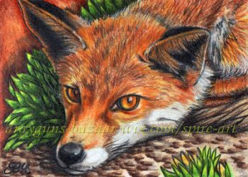 Bright Eyes ACEO by De-Vagrant