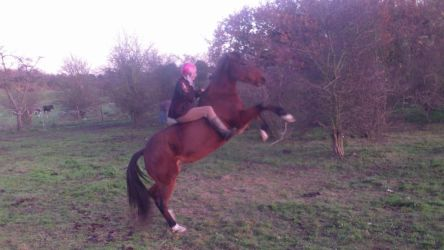 Rearing Horse Freestyle Tackless Natural by StarCrossedPsycho