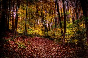 Fall walk in the woods by Schwingding
