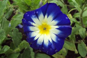 Blue, White, Yellow Flower by 13Forever13