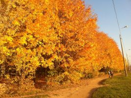 ...and again Autumn by Samouel